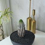 housestudio_ropponngi_plant5