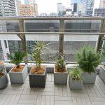 housestudio_ropponngi_verandaplants