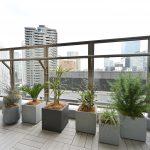 housestudio_ropponngi_verandaplants2